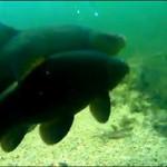 Podglądają ryby w jeziorze