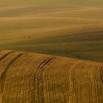 """Rolnicy z Warmii i Mazur borykają się z suszą. """"Jeden dzień opadów nie poprawił sytuacji"""""""
