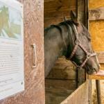 Kolejny uratowany koń trafi do sanatorium w Siemianach