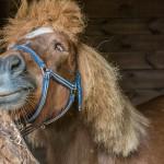 Sanatorium dla koni chce ratować kolejne zwierzęta