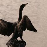 Kto i co zagraża jeziorom mazurskim?