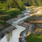 Śnięte ryby w rzece Kumieli
