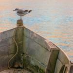 W ptasim świecie