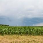 Przez wiosenne przymrozki i śnieg ucierpiało 22 tysiące gospodarstw. Może być ich więcej