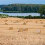 Dni Pola doskonałą okazją do poszerzenia wiedzy o rolnictwie