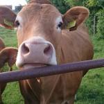 Inwestujący w produkcję rolnicy mogą liczyć na finansowe wsparcie