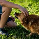 Zwierzęta i dzieci