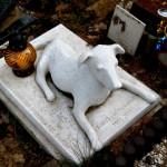 Apel o utworzenie w Olsztynie cmentarza dla zwierząt