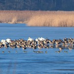 Apelują o wsparcie akcji ratowania ptasiego raju