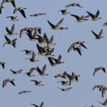 Ptasi piknik w Nadleśnictwie Elbląg. Ornitolodzy i miłośnicy ptaków liczą, obrączkują i obserwują