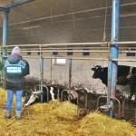 Znów w tym gospodarstwie padły krowy