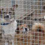 W czasie wakacji przybywa psów w elbląskim schronisku