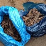 Antropolodzy badają szczątki odkryte w centrum Olsztyna