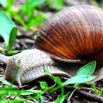 """Zakaz zbierania winniczków na Warmii i Mazurach. """"Populacja ślimaka została osłabiona i konieczna jest jego ochrona"""""""