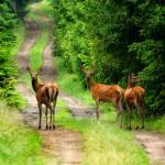 Dramatycznie sucho w lasach na Warmii i Mazurach