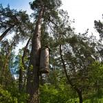 Lasy w okolicach Młynar będą domem dla pszczół