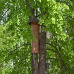 W lasach powstają domy dla dzikich pszczół