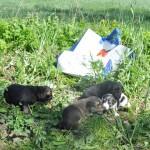 Małe, bezbronne, porzucone w plastikowej torbie