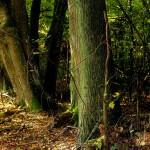 Apelacja spadkobiercy Warmiaka  o zwrot lasu koło Tomaszkowa. Sprawę rozstrzygnie Sąd Najwyższy