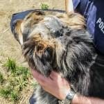 Proces mężczyzn, którzy próbowali zabić psa Barego