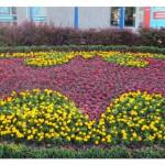 Elbląg: super bohaterowie na kwiatowych dywanach