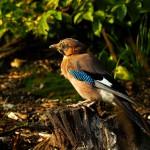 W świecie ptaków