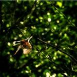 Wyjątkowe zdjęcie gąsiorka