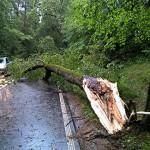 Podczas burzy na jedną z dróg spadło 16 drzew. Kilkadziesiąt razy strażacy wyjeżdżali do usuwania jej skutków