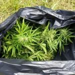 Zatrzymano gang handlarzy narkotyków. Działali w całej Polsce