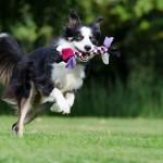 W Giżycku psy mogą biegać bez smyczy. W mieście powstał specjalny wybieg