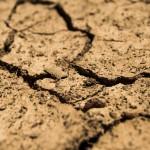 Ponad 930 komisji szacuje straty związane z suszą. Jak wygląda sytuacja na Warmii i Mazurach?