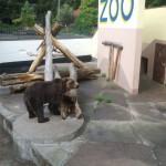 Zwierzęta opuszczą braniewskie ZOO