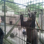 Braniewskie niedźwiedzie wyjeżdżają do Poznania