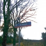 Walka o wycięcie stwarzających zagrożenie drzew