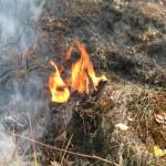 Potężny pożar nieużytków w gminie Górowo Iławeckie