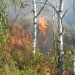 Samolot i kilka zastępów straży pożarnej gasiło pożar młodnika w gminie Purda