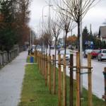 97 drzew na 97. rocznicę odzyskania niepodległości