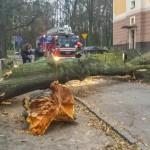 Powalone drzewa i zerwane linie energetyczne. Huraganowe wiatry wyrządziły wiele szkód