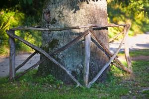 Drzewo Roku można zgłaszać do końca listopada. Fot. Sławomir Ostrowski