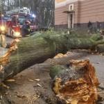 Wycinanie chorych drzew pomaga uniknąć kłopotów