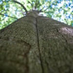 Ostatnie chwile na zgłoszenie Drzewa Roku