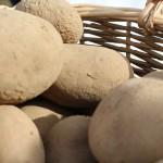 Tradycyjne potrawy, święto pieczonego ziemniaka i msza dziękczynna. Mieszkańcy wsi Kuce podziękowali za tegoroczne plony