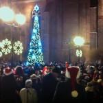Blask choinki przy elbląskiej katedrze
