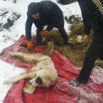 Olsztynek: gmina nie chciała odebrać psów oprawcy zwierząt