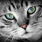 Weź przez internet kota na kolana
