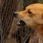 Wataha psów zagryzła daniela