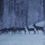 Tropami wilków, dzików i jeleni. Odkrywamy tajemnice lasów Warmii i Mazur