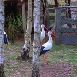Każdy może założyć ośrodek rehabilitacji dzikich zwierząt. Potrzebne jest doświadczenie i pieniądze