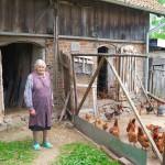 Ankieterzy policzyli zwierzęta polskich rolników