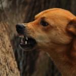 Cztery lata temu psy dotkliwie pogryzły 58-latkę. Jest wyrok dla właściciela zwierząt